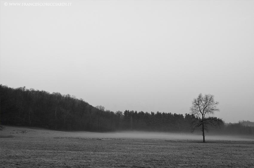 Nebbia (Monastero di Bose)